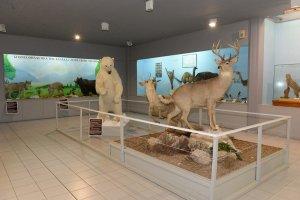Μουσείου Φυσικής Ιστορίας Αιγαίου